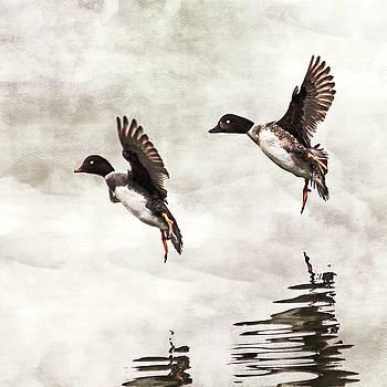 Peggy Collins - Ducks Landing on the Lake