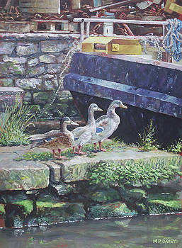 Ducks on dockside by Martin Davey