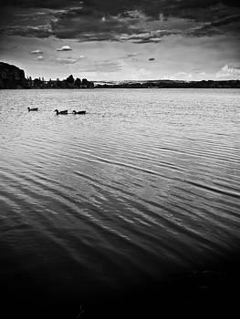 Ducks on the lake by Felix M Cobos