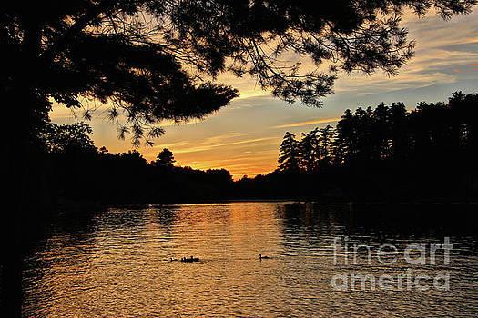 Sandra Huston - Ducks Silhouetted Against An August Sunset