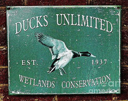 Paul Mashburn - Ducks Unlimited Vintage Sign