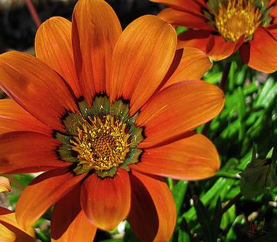 Duet in Orange by S Lynn Lehman