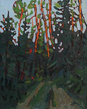 Dumoine Sunrise Spruce by Phil Chadwick