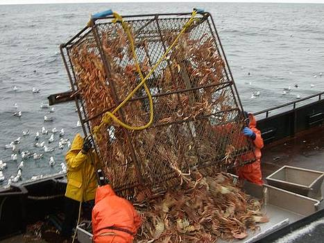 Dumping Crab Pot by Dean Gribble