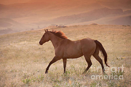 Dun Horse at Sunrise by Terri Cage