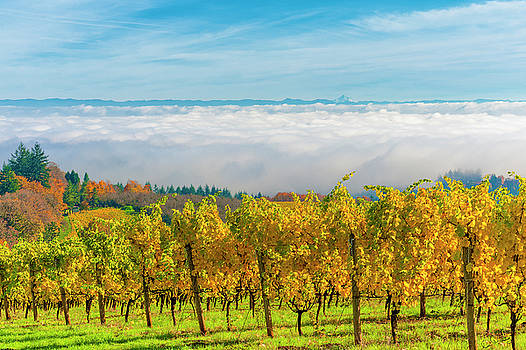 Dundee Hills Vineyards by Dee Browning