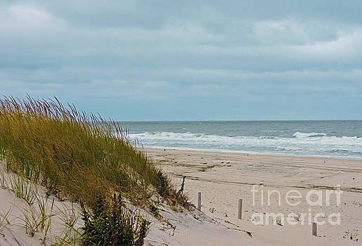 Dune Grass 2 by Helene Guertin