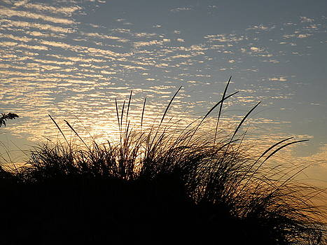 Dune Grass by Donald Cameron