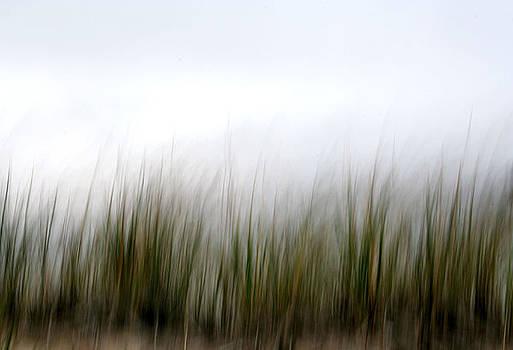 Dune Grass by Doug Hockman Photography