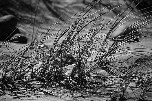 Bonnie Bruno - Dune Grass in B/W