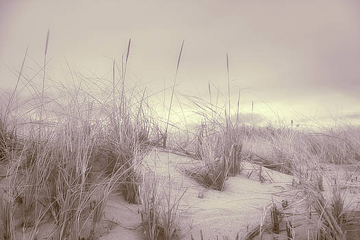 Dune Grass by Kate Hannon