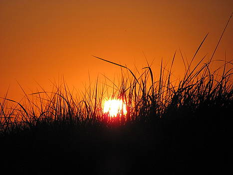 Dune Grass Sunset by Gregory Smith