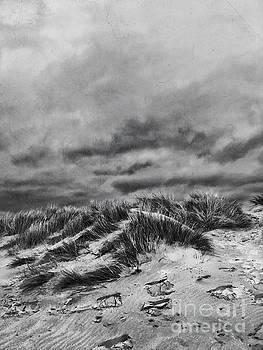 Dune by John Edwards
