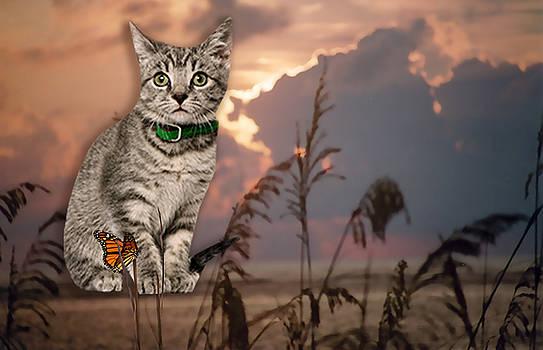 Dune Kitty by Cynthia Leaphart
