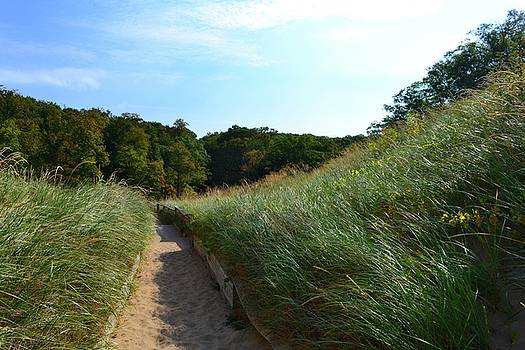 Dune Path at Laketown by Michelle Calkins