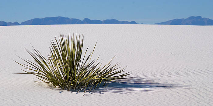 Dune Plant by Marie Leslie