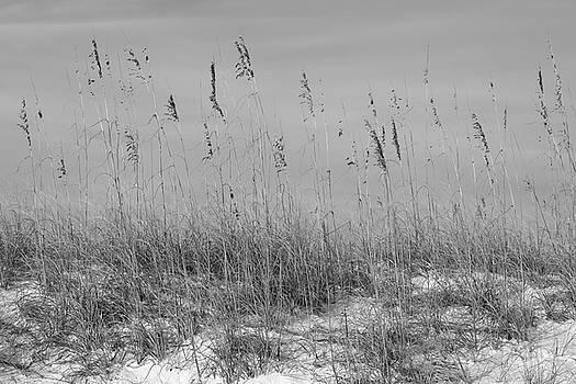 Paul Rebmann - Dune Seaoats