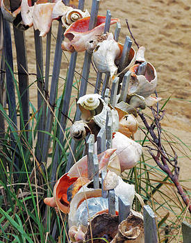 Ann Tracy - Dune Shell Fence