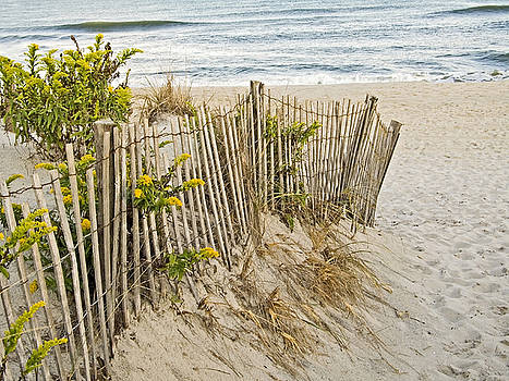 Dunes and Fence by Andrew Kazmierski