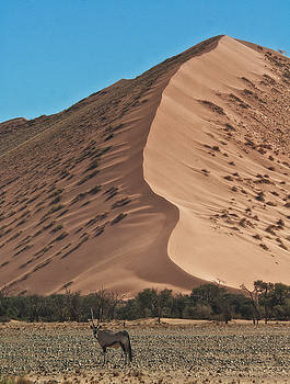 Dunes and Oryx by Sandy Schepis