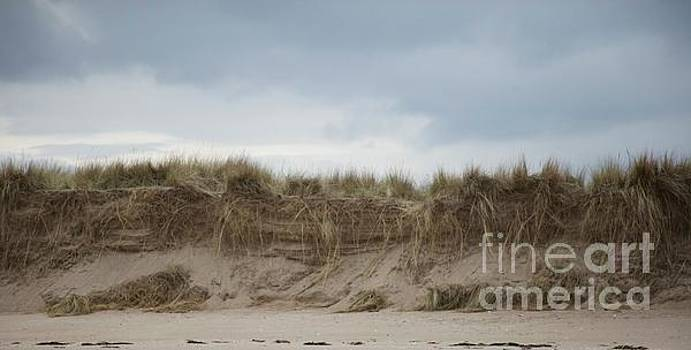 Dunes at tentsmuir against a painterly sky  by Lynn England