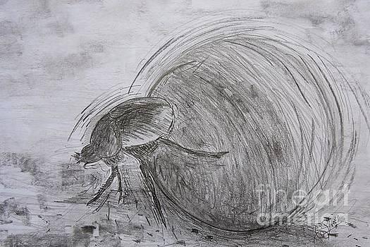 Caroline Street - Dung Beetle