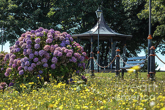 Dungarvan Park 3 by Marc Daly