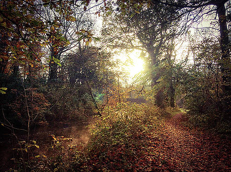 Dunmore Wood - Autumnal Morning by Andy Walsh