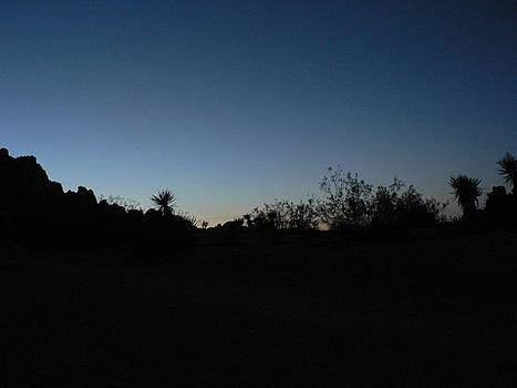 Dusk in the Desert by Susan Norton