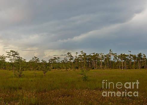 Dusk in the Everglades by Matt Tilghman