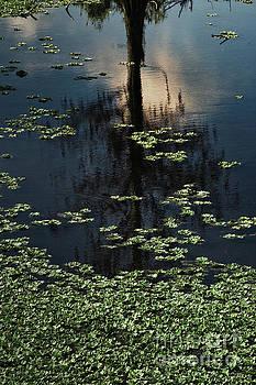Dusk in the Swamp by Margie Hurwich