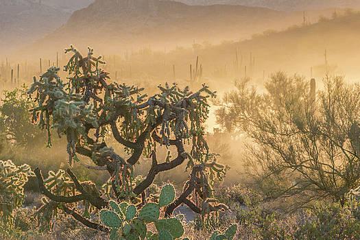 Dust Storm by Trish VanHousen