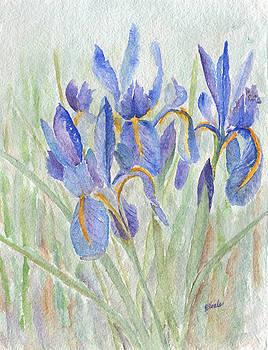 Dutch Iris by Bev Veals