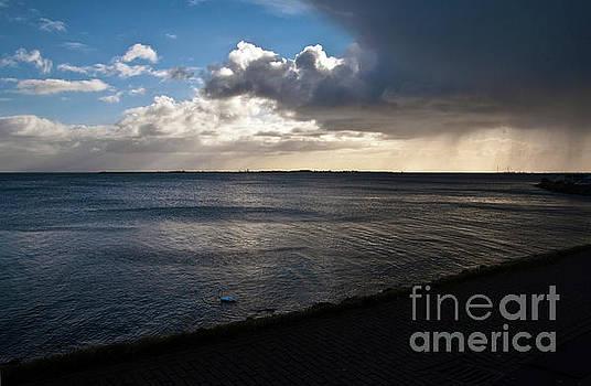 Dutch Swan Sound by Silva Wischeropp
