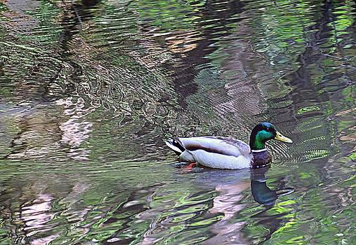 Duck Patterns by Suzy Piatt