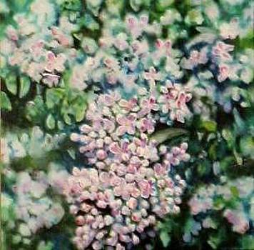 Dwarf Korean Lilac by Karen Sloan