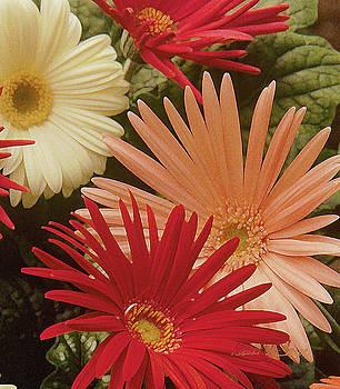 Dynamic Daisys by Robert J Sadler
