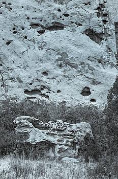 Each Hole In The Background Rock Is An Avian Domicile.  by Bijan Pirnia