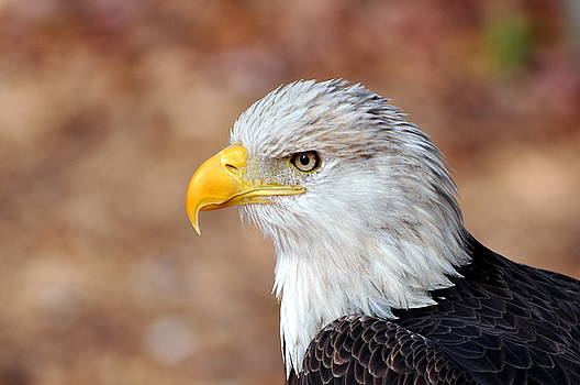 Marty Koch - Eagle 10