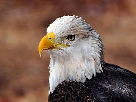 Marty Koch - Eagle 25