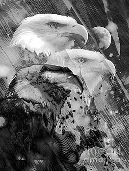 Eagle Action by Robert Ball
