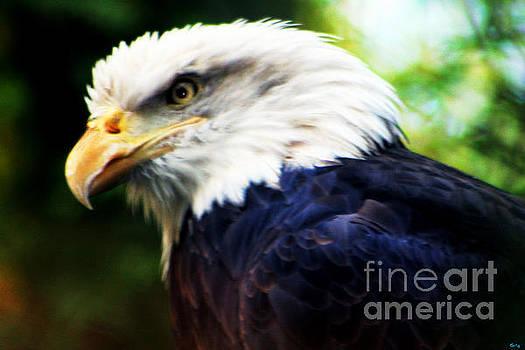Nick Gustafson - Eagle Close Up