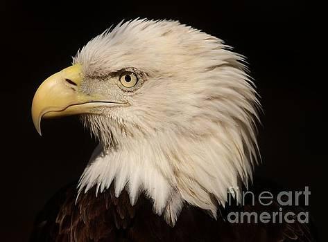 Paulette Thomas - Eagle Close Up