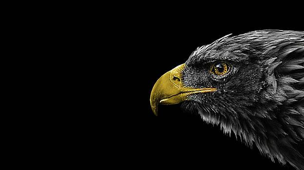 Eagle Darkness by Mohammad Raiyn