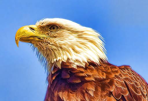 Eagle by Darryl Luscombe