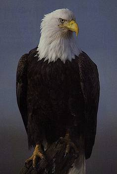 Diane Kurtz - Eagle