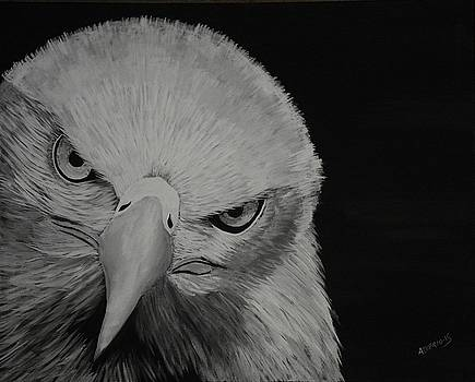 Raptor by Edwin Alverio