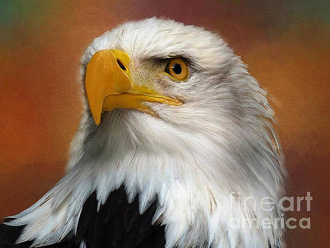 Eagle Eye by Jim Hatch
