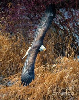 Eagle Eyes by Mike Dawson