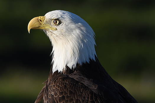 Eagle Eye View by Sherry McKellar